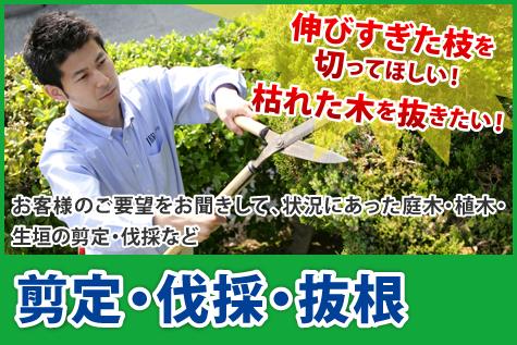 庭木(植木)の剪定・伐採